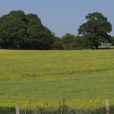 Heath Woods