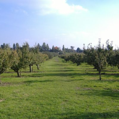 Orchards And Fields