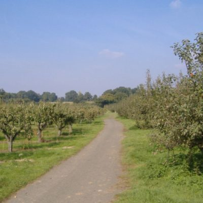 Orchards And Fields2