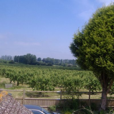 Orchards2